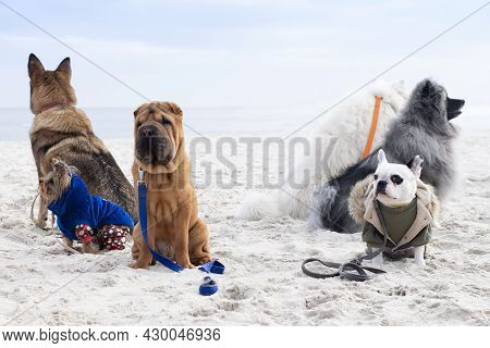 A Group Of Dogs Is Engaged In Obedience. Dogs Training On The Beach.