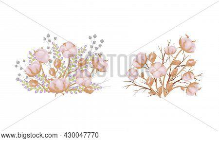 Cotton Plant Branches Set. Bouquet Of Ripe Cotton Flowers Vector Illustration
