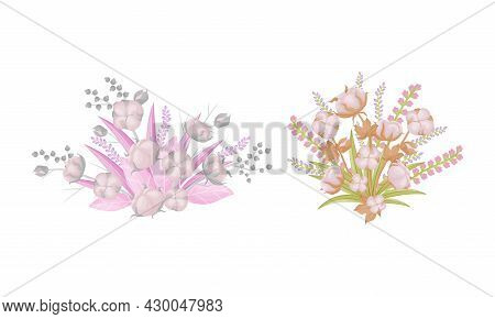 Cotton Plant Branches Set. Beautiful Flowers Boll Fiber In Opened Seeds Case Vector Illustration