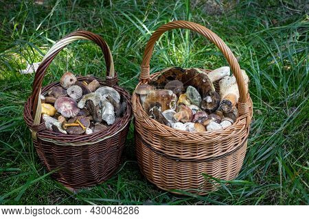 Shot Of Pair Wicker Baskets With Edible Mushrooms On Grass