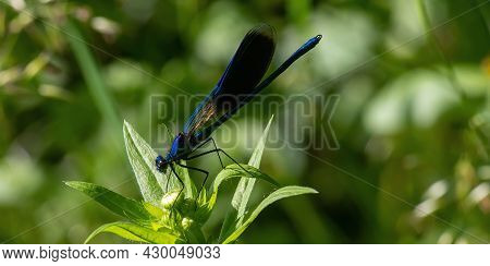 Dragonfly On A Green Background. Summer Sunny Day. Close Up