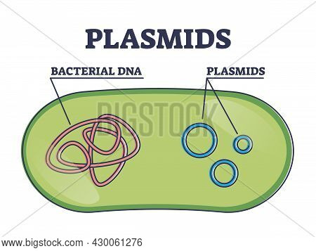 Plasmids With Cells Extrachromosomal Dna Molecule Structure Outline Diagram. Labeled Educational Inn