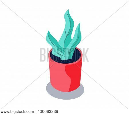 Decorative Potted Plant. Houseplant With Long Leaves In Red Ceramic Pot. Floral Decoration For Home