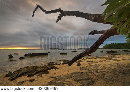 A Tree Next To A Body Of Water On Santo Island In Vanuatu