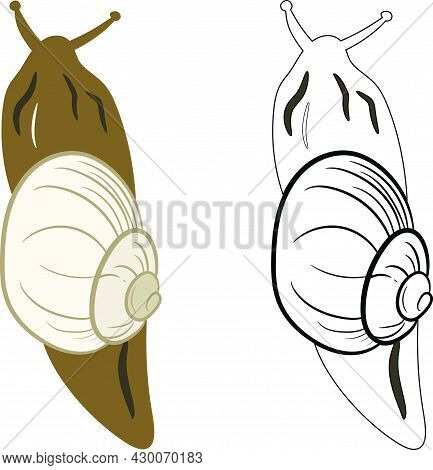 Snail Insect 2d Illustration Clipart. Shelled Gastropod 2d Vector.