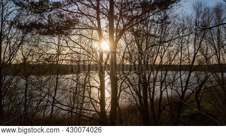 Beautiful Sunrise Or Sunset View Of Nature Landscape On Sunny Spring Day. Green Tall Trees On Lake C