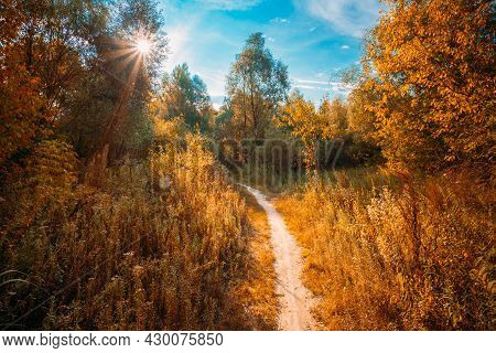 Road, Path, Way, Lane, Pathway In Beautiful Autumn Forest. Sun Shining Through Canopy Of Trees Woods
