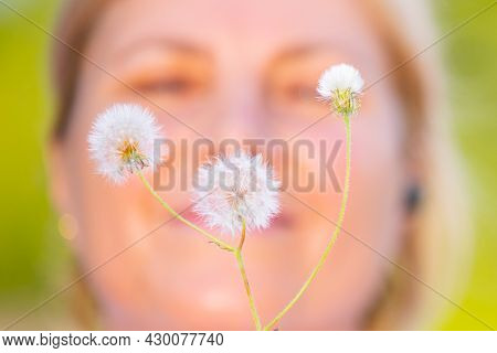 A Beautiful Shot Of The Dandelion Flowers Against The Background Of Woman Face, Means Calmness, Ligh