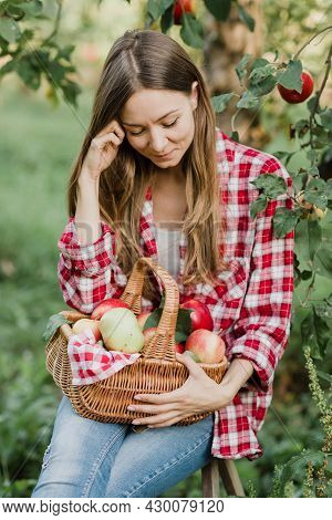 Beautiful Girl Picking Ripe Organic Apples In Basket In Orchard Or On Farm On Fall Day.