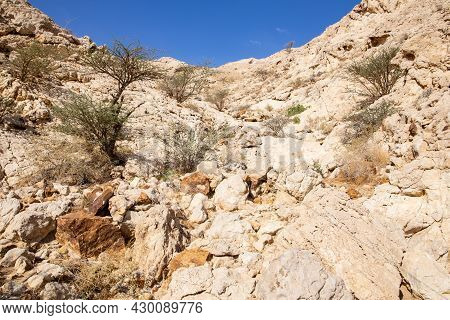 Dry, Arid Limestone Mountains With Barren Acacia Trees In The Valley Of The Caves In Mleiha Archaeol