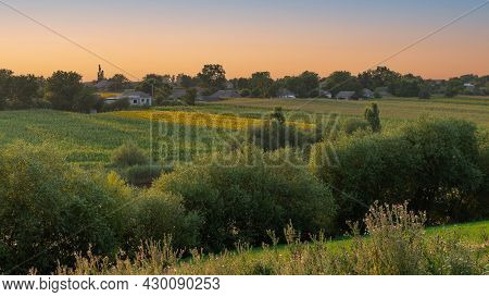 Summer Landscape With Green Trees On The Slopes Of The Ravine And Cornfield And Sunflowers Fields On
