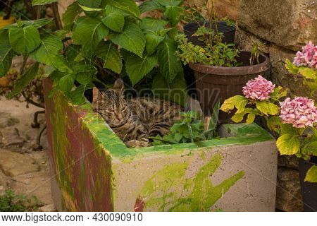 A Domestic Cat Relaxes In A Planter Down A Quiet Residential Street In The Historic Medieval Hill Vi