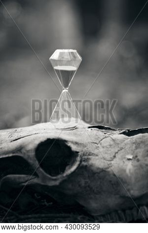 Hourglass On Horse's Skull, Concept Of Time Is Fleeting