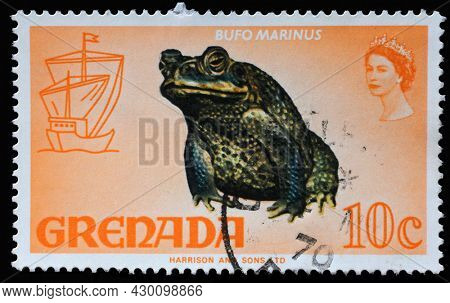 ZAGREB, CROATIA - SEPTEMBER 18, 2014: Stamp printed in Grenada shows Cane Toad (Bufo marinus), Series Flora and Fauna Definitives 1968-1971, circa 1969