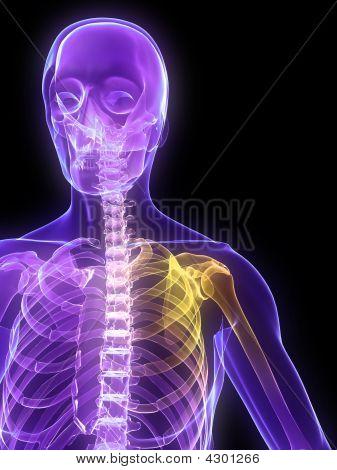 Highlighted Shoulder Joint