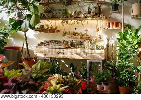 Inside Flowers And Vintage Interior Decorations Accessories Store. Shelves Of Flowerpots For Indoor,
