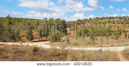 leere Wanderweg zwischen niedrigen Hügeln mit pinetrees