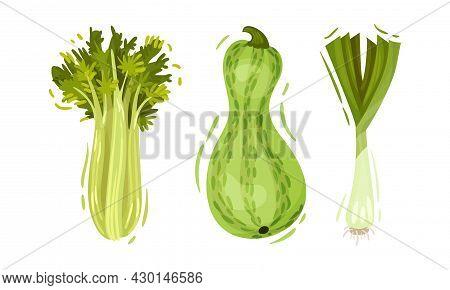 Green Vegetables Set. Celery, Zucchini, Green Onion Organic Vegetarian Food Vector Illustration