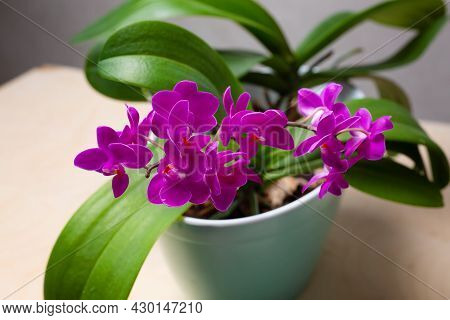 Vase With Various Flowers Of The Mini Phalaenopsis Orchid. High Quality Photo