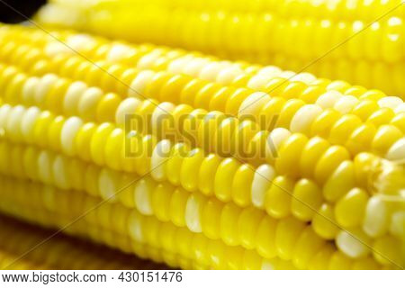 Close View On Homemade Golden Corn Cob. Close Up.
