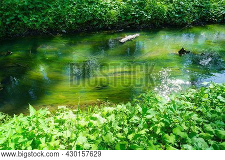 Small Stream With Mud In Summer. Dirty, Muddy Water Flows