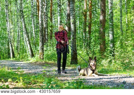 A Girl Walks With A Dog Warm Day, A Pleasant Walk Through The Forest. Friends A Dog And A Girl