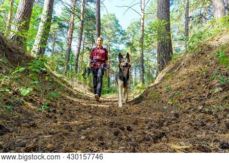 Friendship Between Human And Dog. Walk In Nature. A Girl On A Walk With A Dog
