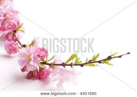 Pink Branch Close Up