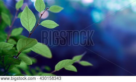 Colorful leaves background. Fresh foliage on dark green and blue background.