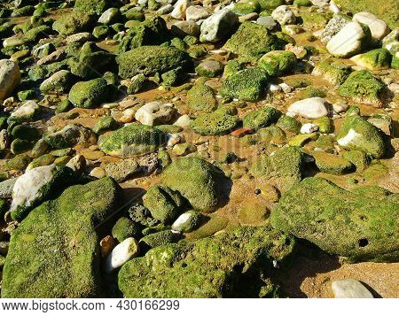 Close Up View Onto Sea Stones Of Persian Gulf, Covered By Remains Of Green Seaweed. Picture Taken On