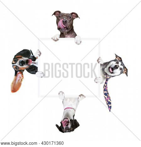 studio shot of four cute dogs on an isolated background holding a blank white sign