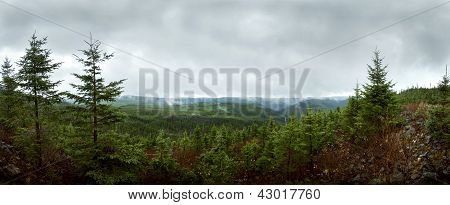 Deap forest Panorama - Reforestation