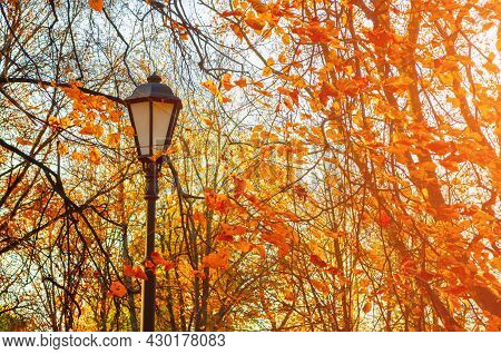 Fall landscape, autumn trees in sunny autumn park, metal lantern on the background of orange autumn trees, fall landscape, fall trees, fall scene, sunny fall nature