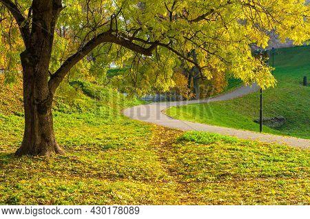 Autumn park alley, autumn city park, beautiful yellow autumn tree on the foreground. Autumn park alley, autumn park trees, autumn park landscape
