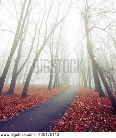 Autumn foggy November landscape. Autumn in the foggy city park. Autumn alley in foggy autumn weather. Autumn landscape, autumn trees in foggy day, autumn colorful landscape, autumn park alley