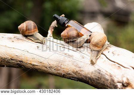 Serum With Snail Mucin, Snail Mucus, Concept Natural Cosmetics