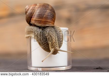 Jar With Cream With Snail Mucus, Snail On Top Of The Jar, Concept Natural Cosmetics