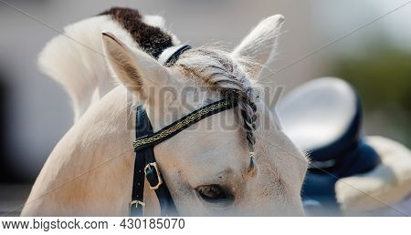 A Horse With A Braid Of Bangs. The Ears, The Mane And The Horse's Eye Close Up. Horse's Eye Close-up