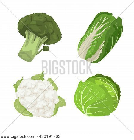 Various Types Of Cabbage Carton Illustration Set. Organic Broccoli, Cauliflower And Chinese Cabbage