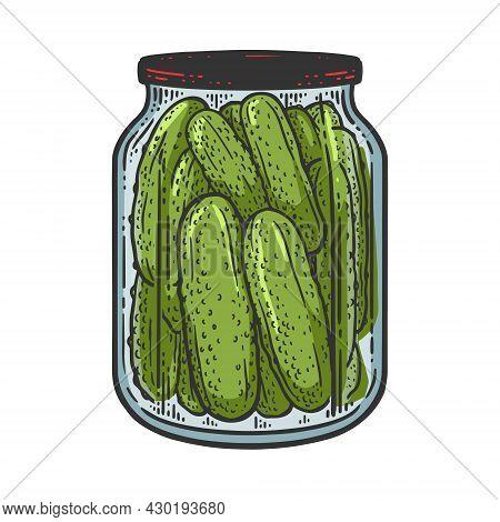 Pickled Cucumbers Color Sketch Engraving Vector Illustration. T-shirt Apparel Print Design. Scratch