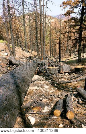 Burnt Pine Trees On A Charcoaled Landscape Caused From A Wildfire During Drought Conditions Taken At