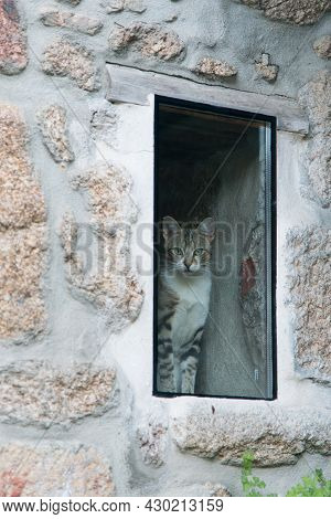 Cute Cat Looking To The Camera Through A Window From Inside A House. Warm Home Concept. Portugal, Eu