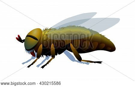 Horsefly, Parasite Insect, Carriers Of Anthrax And Other Diseases, Bloodsucker. Color Vector Illustr
