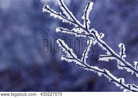 Frost Covered Tree Branch In Winter On A Dark Background
