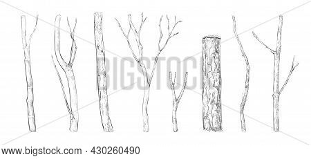 Tree Branch Engraving. Hand Drawn Forest Twigs. Dry Wood Log And Lumber Rustic Graphic Templates. Na