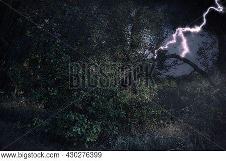 Dark Cloudy Sky With Lightning Striking Tree. Thunderstorm