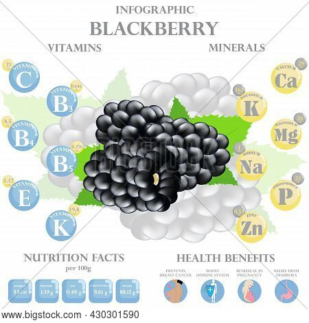 Infographic About Nutrients In Black Berry. Vector Illustration Of Black Berry, Vitamins, Berry, Hea