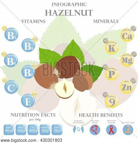 Infographic About Nutrients In Hazelnut. Vector Illustration Of Hazelnut, Vitamins, Nuts, Healthy Fo