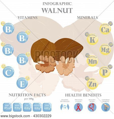 Infographic About Nutrients In Walnut. Vector Illustration Of Walnut, Vitamins, Nuts, Healthy Food,