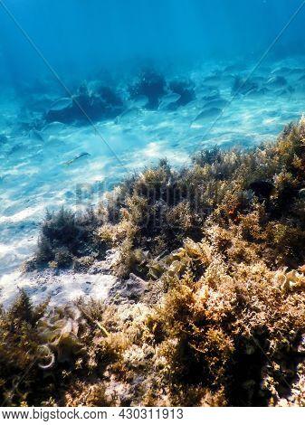 Underwater Landscape Reef With Algae, Blue Underwater